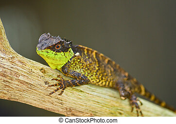 spiny lizard - green spiny lizard sitting on the tree
