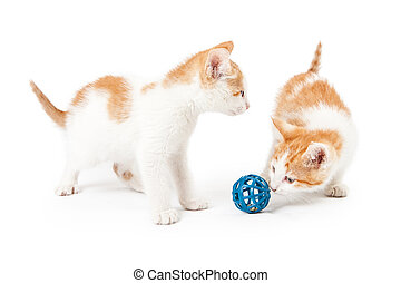 Two Cute Kittens Playing With Toy