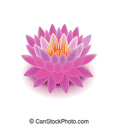 Lotus flower isolated on white vector