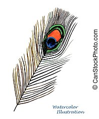 Watercolor peacock feather