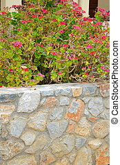 Stone fence and flowers.