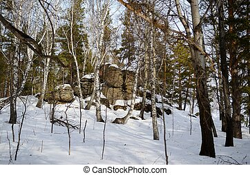 Altay forest - Winter forest with large boulders on the top...