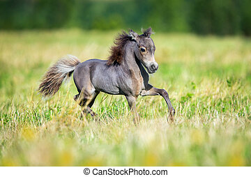 Small horse running in field