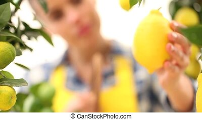 smiling woman picks a lemon and put it in the basket wicker