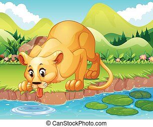 Lion drinking water in the pond illustration