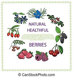 Natural healthful berries hand drawn vector illustration