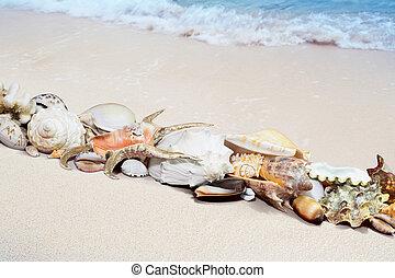 tropicais, praia, conchas