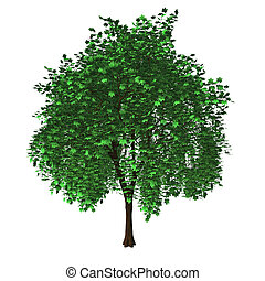 arbre, isolé, Érable