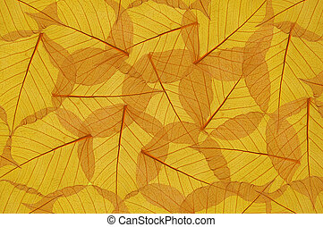 backdrop of colorful floral yellow leaves