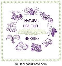 Natural healthful berries hand drawn vector illustration.