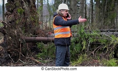Forest inspector with smartphone near tree in destroyed...