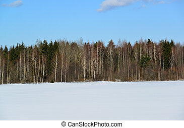Winter mixed forest of coniferous and deciduous trees -...