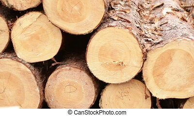 processing of tree logs video