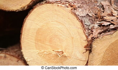 wood logs Plant working oak