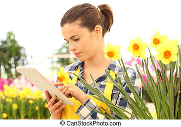 woman tusing tablet computer in flowers garden, narcissus closeup