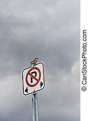 Bird sitting on no parking sign - A small bird sitting on a...
