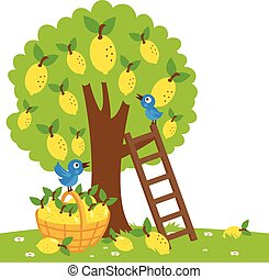 Lemon tree harvesting - Vector Illustration of a lemon tree,...