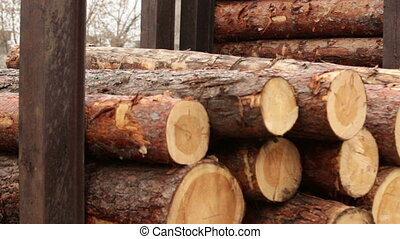 processing of tree logs