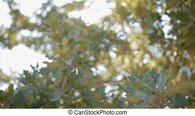 Green foliage out of focus. Sunshine shimmer through green...