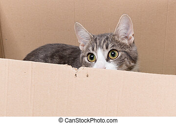 do not want to move - little cat looking out a box with big...