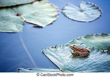 Water lily in the lake and frog close up photo