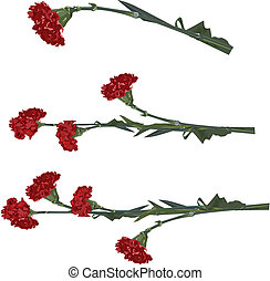 carnation flower in vector format