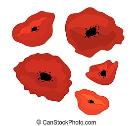 poppies - red poppies