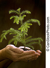 Holding New Life In Hands - Female hands gently holding new...