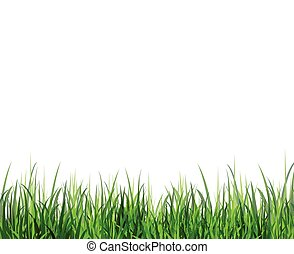 Grass green border