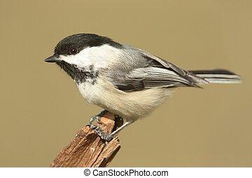 Bird On A Stump In Winter