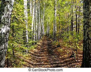 birch woods alley