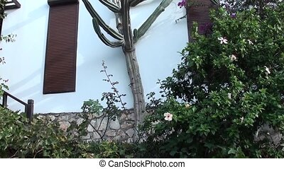 Monster cactus tall as building - Huge tall cactus at hight...