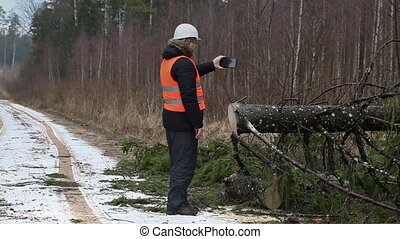 Forest inspector filmed spruce on forest road