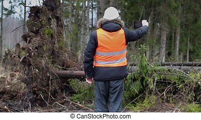 Forest inspector with tablet PC filmed spruce