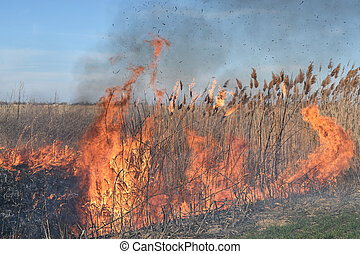 Burning dry grass and reeds Cleaning the fields and ditches...