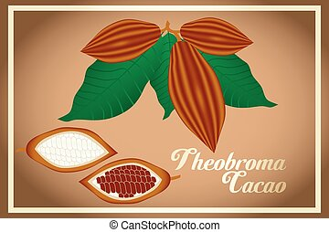 Cacao fruits and leafs - Theobroma Cacao - Theobroma cacao -...