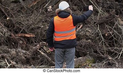 Forest inspector filmed near to pile sawed bushes and...