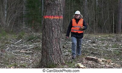 Forest inspector with tablet PC near last tree at clear...