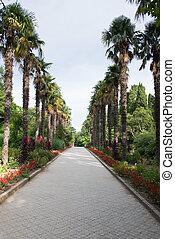 Nikitsky botanical garden in Crimea