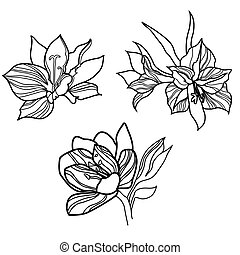 Floral design elements - Set of vector floral design...