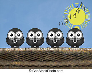 Dawn Chorus - Comical bird boy band singing the dawn chorus...
