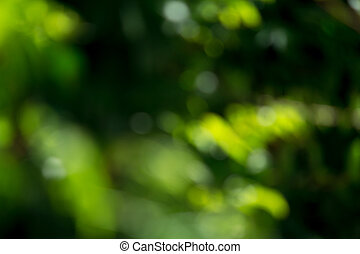 Light shining on tree leaves Booked Blur Abstract Background...