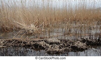 Burned reed field on a beach of Lake Prespa, Macedonia -...