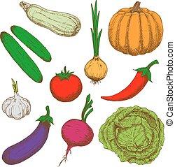 Healthy farm vegetables color sketches - Color sketches of...