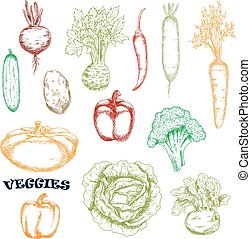 Vegetables sketches in retro style