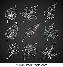 Leaves silhouettes chalk cketches set - Trees and bushes...