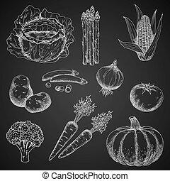 Chalk sketches of fresh vegetables - Healthful vegetables...