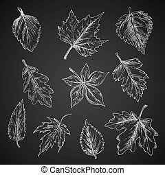 Chalk leaves sketch on blackboard - Chalk leaves of trees...