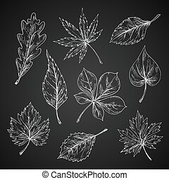 Chalk sketches of leaves silhouettes - Leaves chalk sketches...