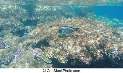 Exotic fish near the surf line, Underwater